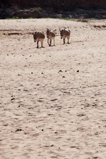 Kenya drought Donkey Sanctuary Water