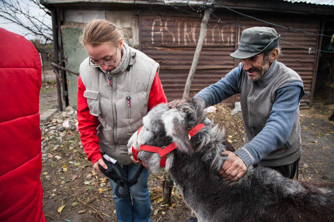 Donkey Sanctuary, Romania.