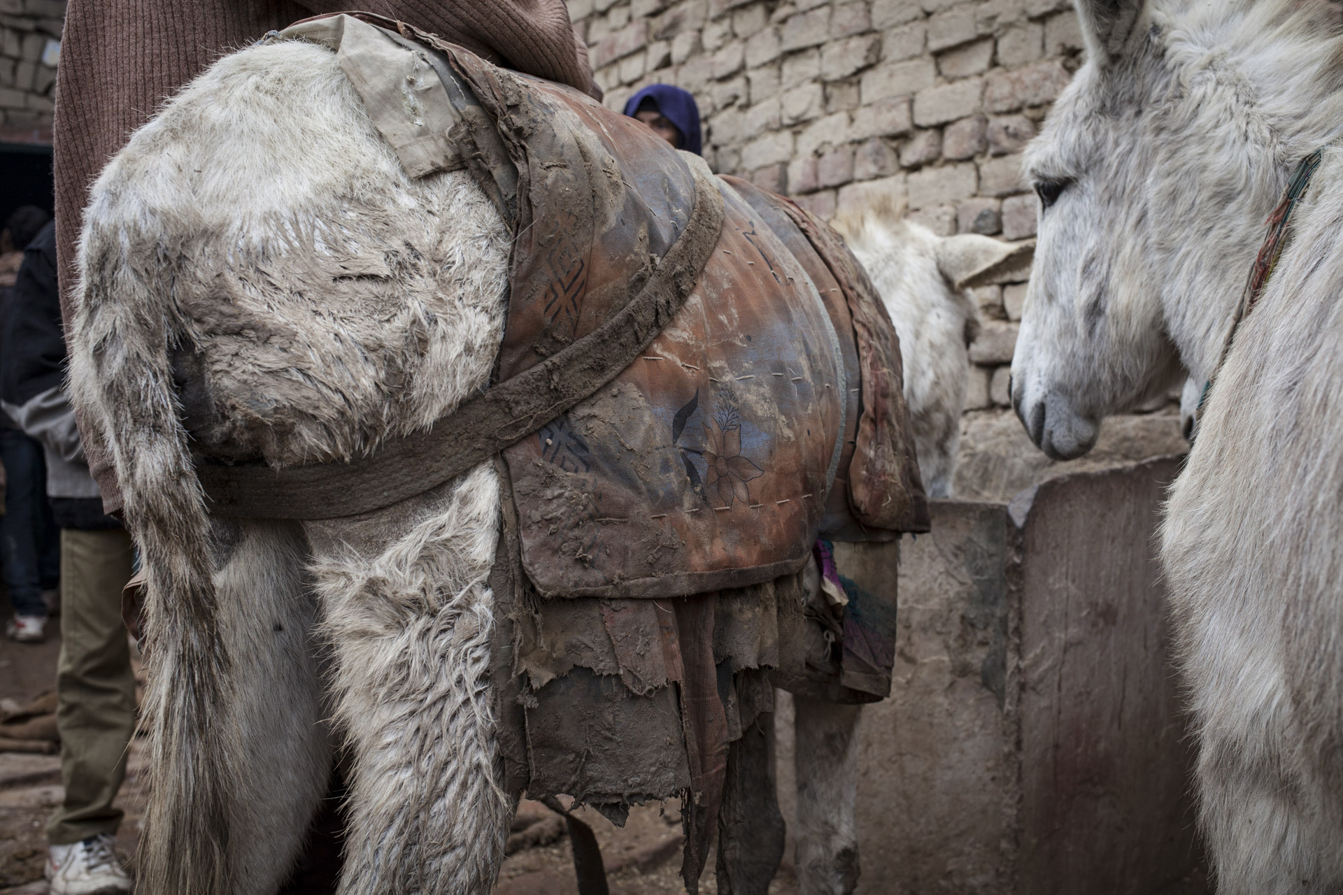 Madhupur Village near Agra, Uttar Pradesh, India. Harish (19) owns five donkeys and works at the VIP brick kiln about ten kilometres from Madhupur village.