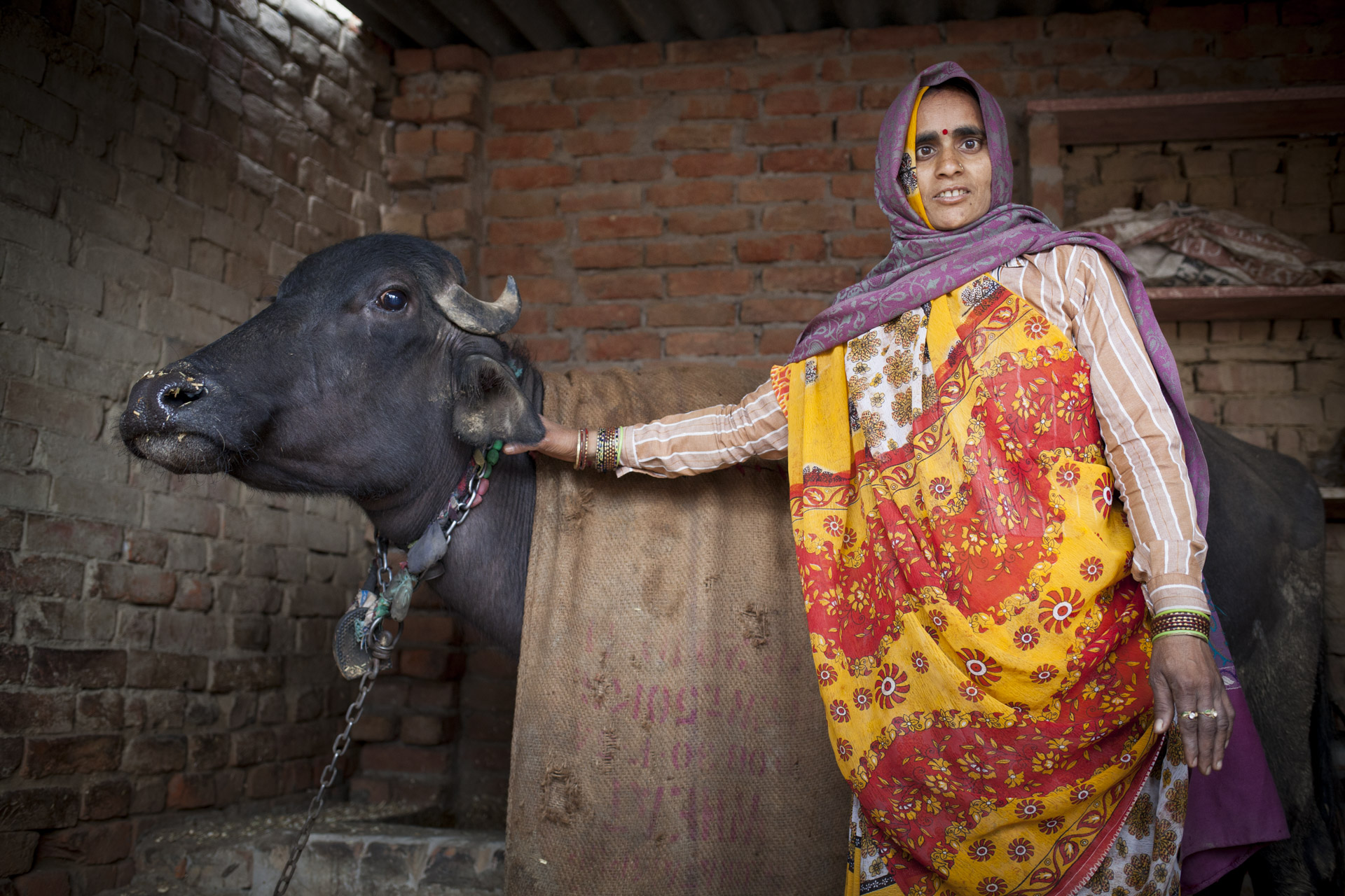 Madhupur Village near Agra, Uttar Pradesh, India. Annar Devi and her family are cousins to Harish. They keep a buffalo and calf, a horse and goats in the stable and yard outside their house.