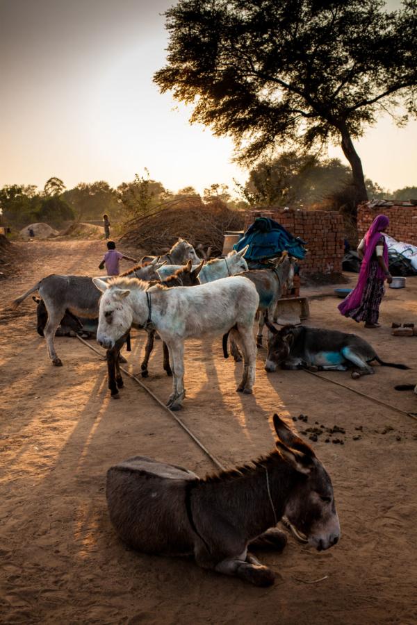 Modern India is built on the backs of donkeys.