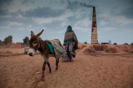 Indian brick kiln donkeys