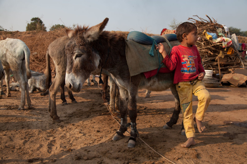 M.A Ambabur Kiln, Ahmedabad.Modern India is built on the backs of donkeys.