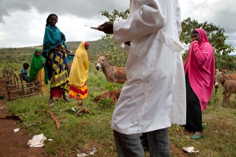 Ethiopia. Donkey clinic