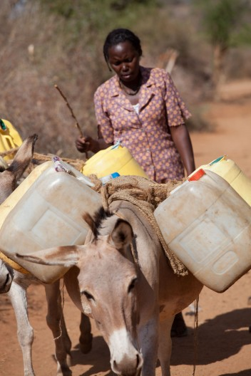 Kenya drought Donkey Sanctuary Water