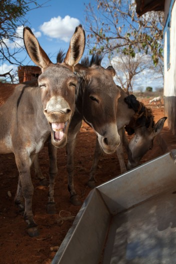 Kenya Donkey Sanctuary drought water