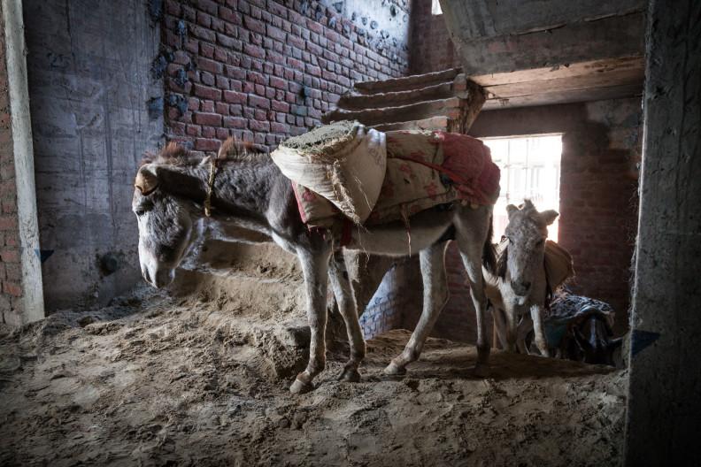Donkeys building sites Delhi India