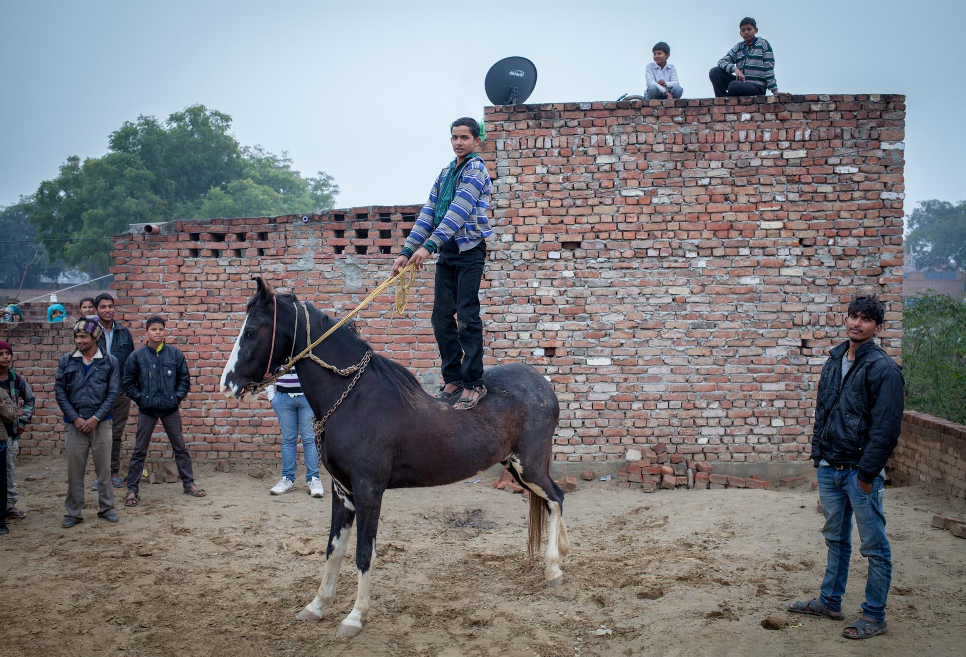 Mule and man. Donkey Sanctuary