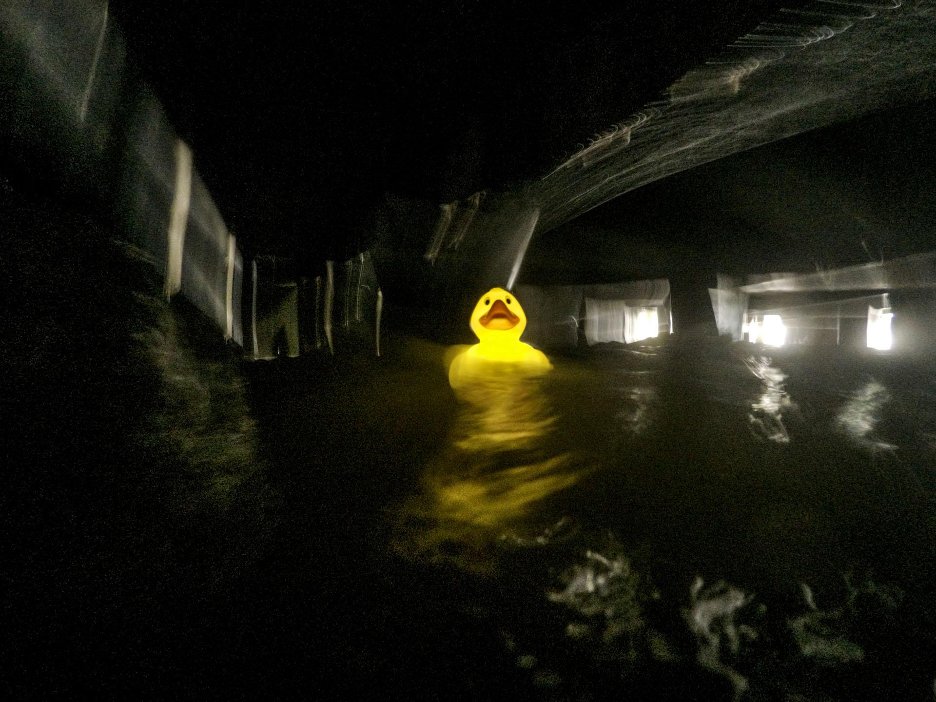 Duck. Thames Tides. Crispin Hughes.